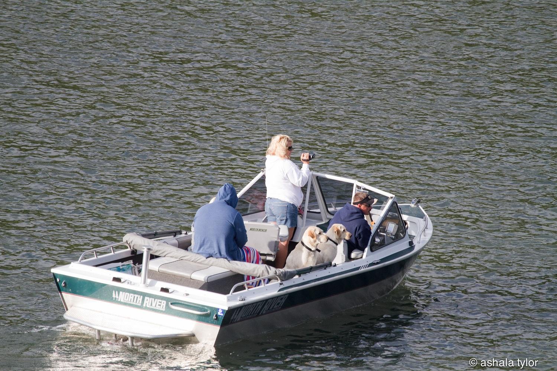 Klamath River whale hit by boat – Dottie's pissed!