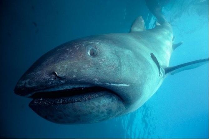 Rare shark caught by fishermen