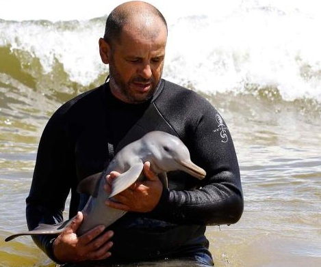 For infant dolphins who are separated from their mothers the dolphins