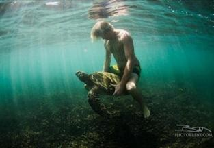 Photo shows Hawaii surfer riding turtle (VIDEO) JOB to be fined $13,000?