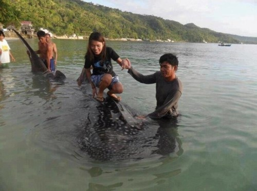 Photo of whale shark used as surfboard sparks outrage!