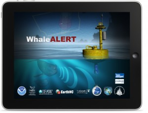 iPad app helps mariners save endangered right whales