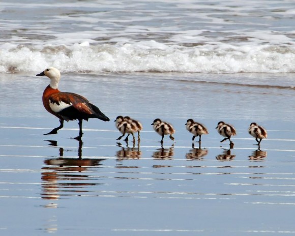 Surfer Chicks Rule!
