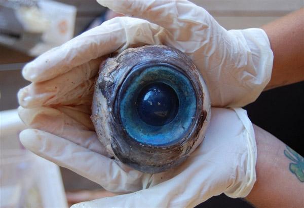 Giant Eyeball Washes Up on Florida Beach