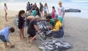 Shark attack australia 2013