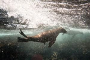 how-marine-mammals-keep-oxygen_68461_600x450