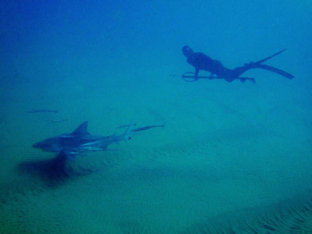 Cape Vidal Shark and Spearfisherman