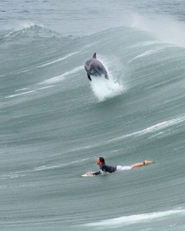a.baa-Dolphin-Joins-Surfer