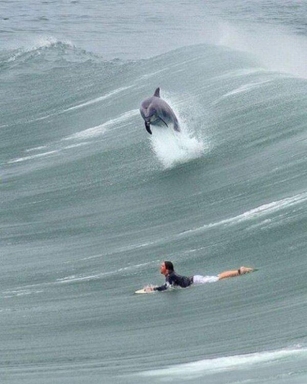 Carolina Beach Ocean Rescue