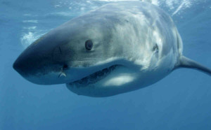 A 43-year-old man has been seriously injured after being attacked by a shark while surfing in Japan.